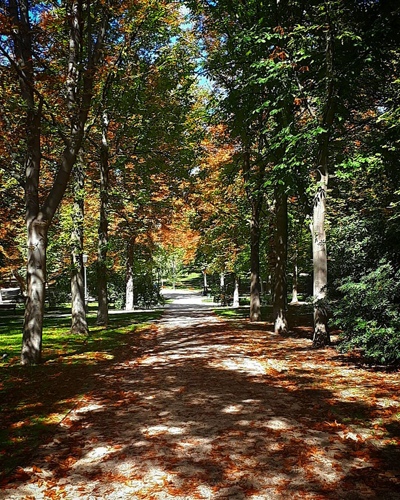 a path in the park